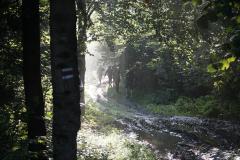Szlak z Przelęczy Beskid na Czerteż